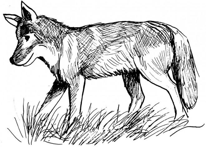 Coloriage et dessins gratuits Renard qui marche au crayon à imprimer