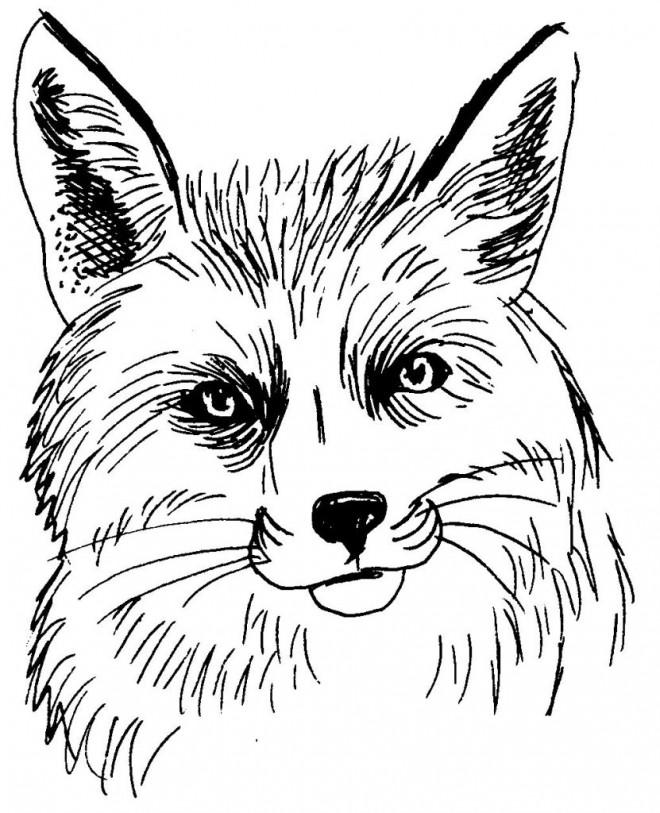 Coloriage t te de renard en noir dessin gratuit imprimer - Renard en dessin ...