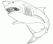 Coloriage dessin  Requin 11