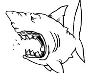 Coloriage dessin  Requin 7