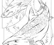 Coloriage Requin armé