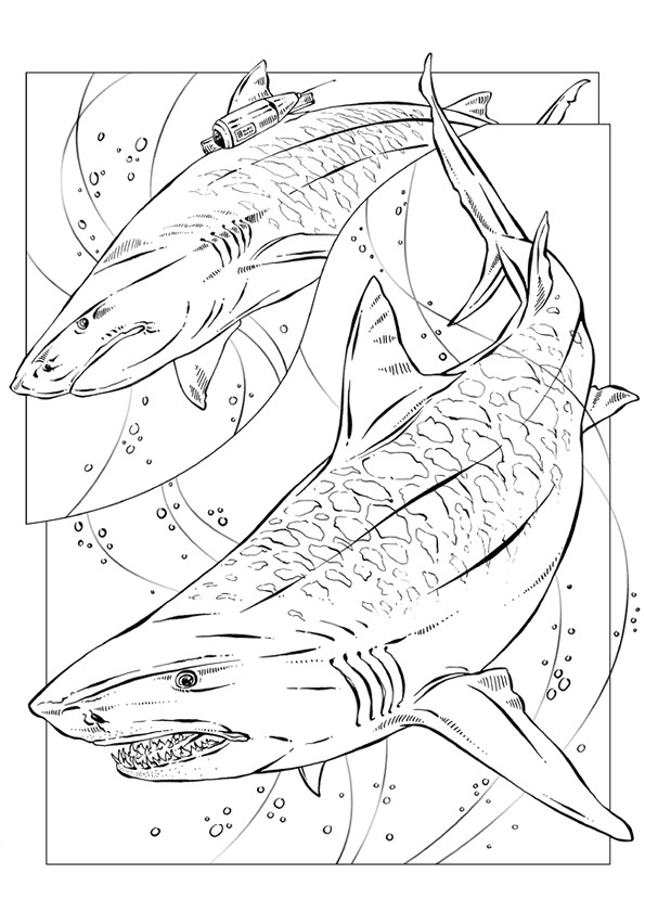 Coloriage requin arm dessin gratuit imprimer - Requin rigolo ...