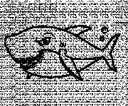 Coloriage Requin avec le regard méchant