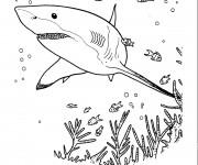 Coloriage Requin cherche à manger