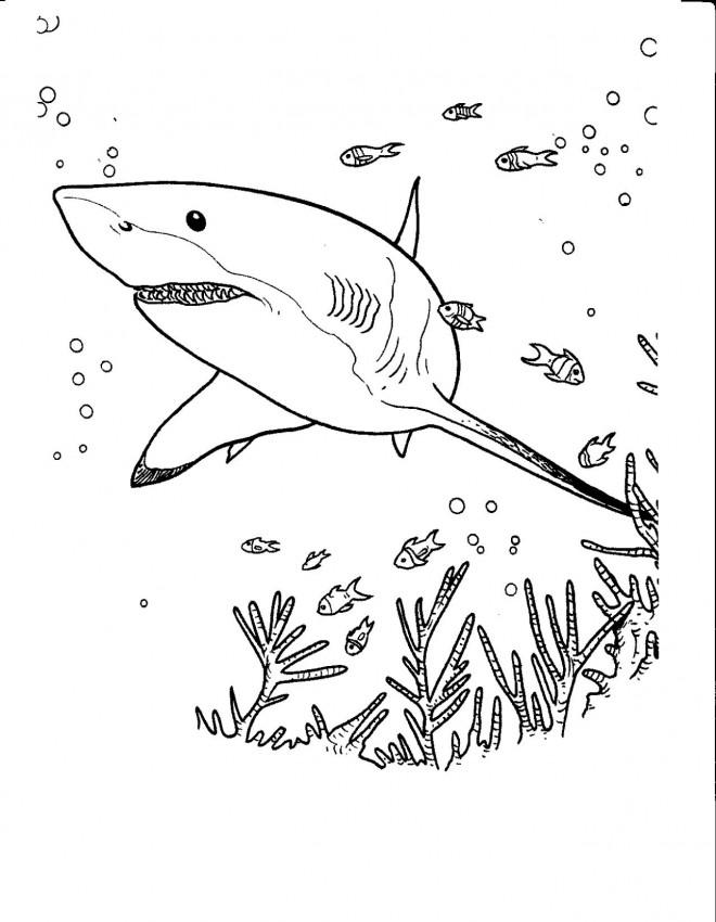 Coloriage et dessins gratuits Requin cherche à manger à imprimer