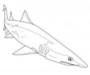 Coloriage et dessins gratuit Requin couleur à imprimer