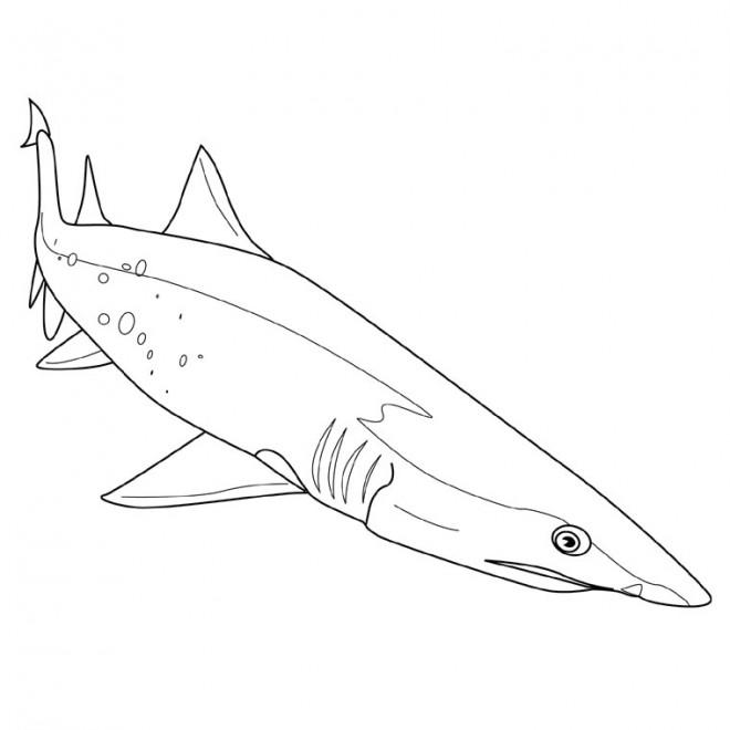 Coloriage requin couleur dessin gratuit imprimer - Requin rigolo ...