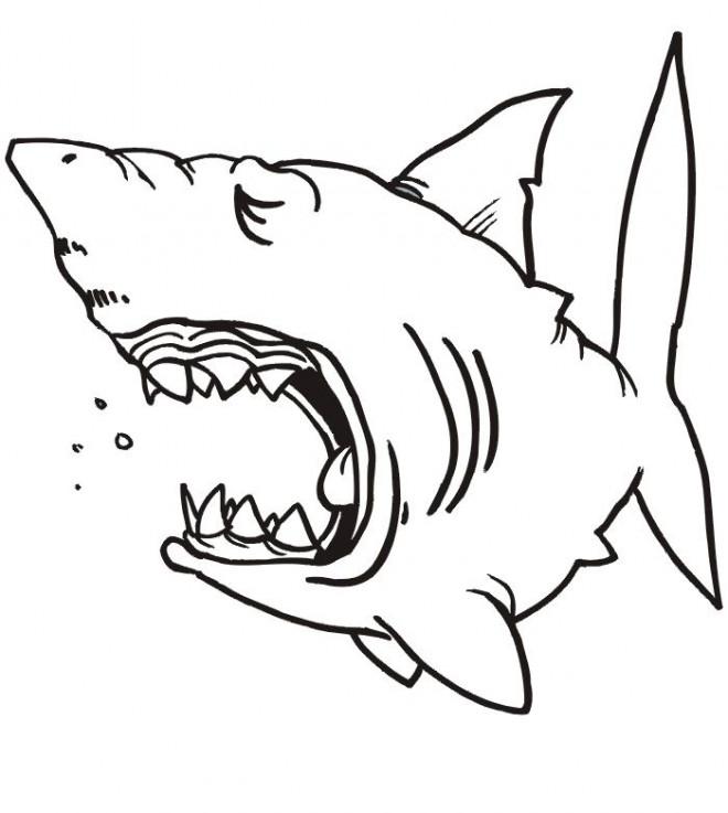 Coloriage et dessins gratuits Requin dormant à imprimer