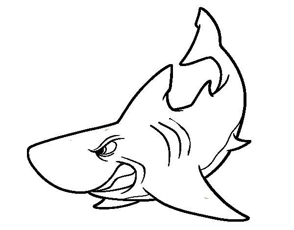 Coloriage et dessins gratuits Requin nerveux à imprimer