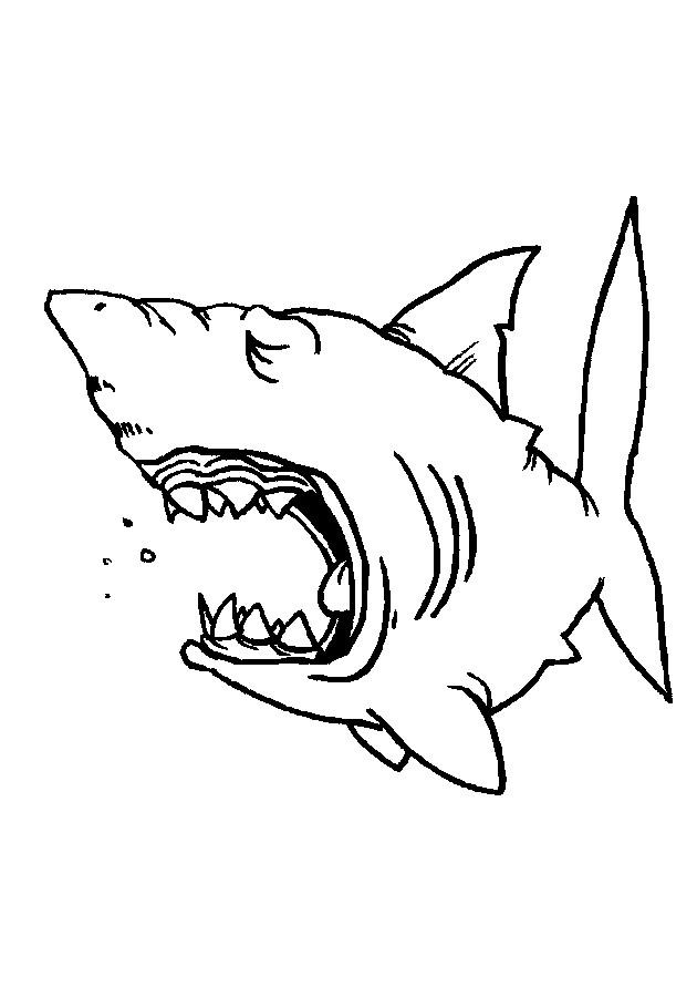 Coloriage requin paresseux dessin gratuit imprimer - Requin en dessin ...