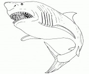 Coloriage Requin portrait