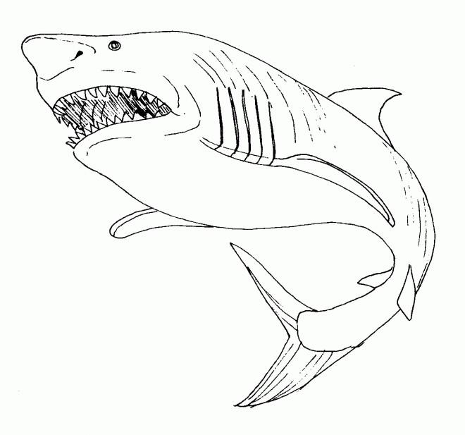 Coloriage Requin Portrait Dessin Gratuit A Imprimer