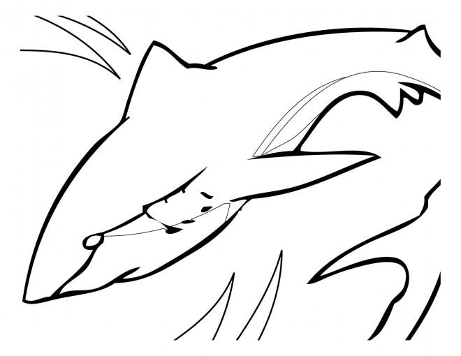 Coloriage et dessins gratuits Requin qui nage à imprimer