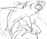 Coloriage Requin réaliste