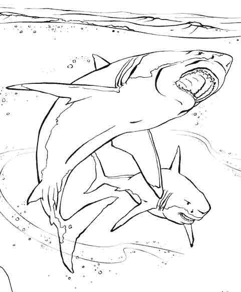 Coloriage et dessins gratuits Requin réaliste à imprimer