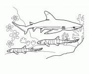 Coloriage Requin stylisé
