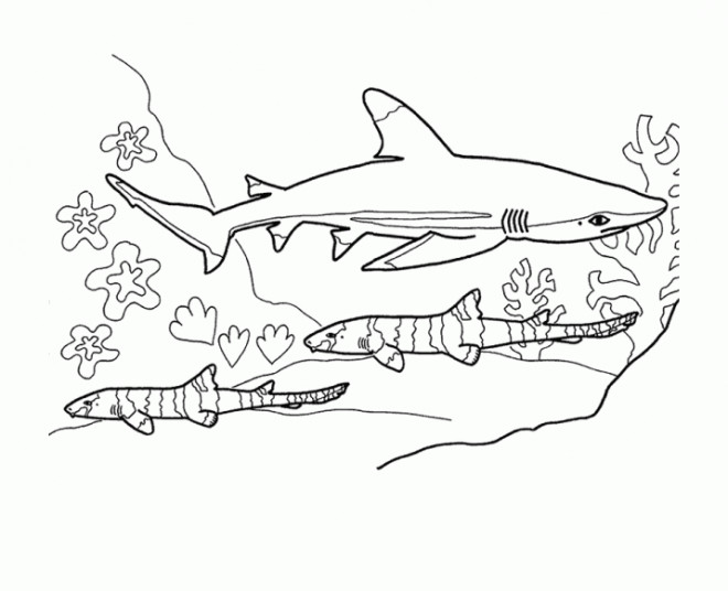 Coloriage Requin Stylise Dessin Gratuit A Imprimer