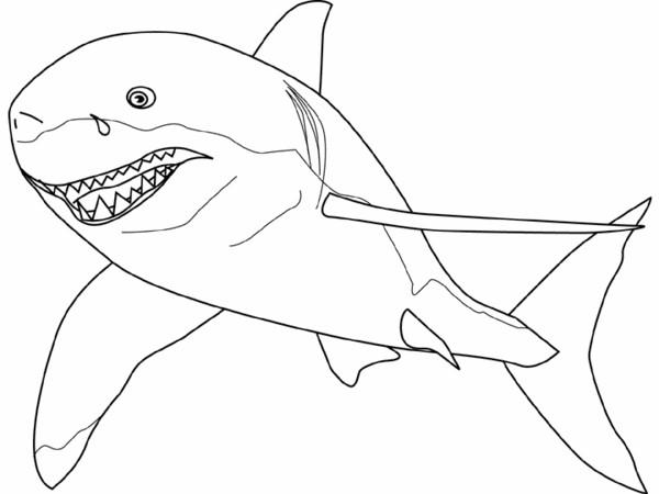 Coloriage requin tigre dessin gratuit imprimer - Coloriage de requin a imprimer ...