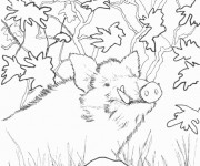Coloriage et dessins gratuit Sanglier 18 à imprimer