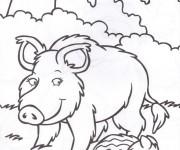 Coloriage et dessins gratuit Sanglier 19 à imprimer