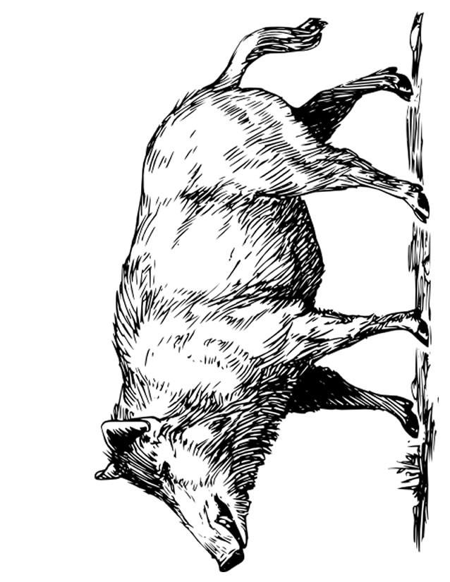 Coloriage et dessins gratuits Sanglier 2 à imprimer