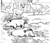 Coloriage et dessins gratuit Sanglier 8 à imprimer
