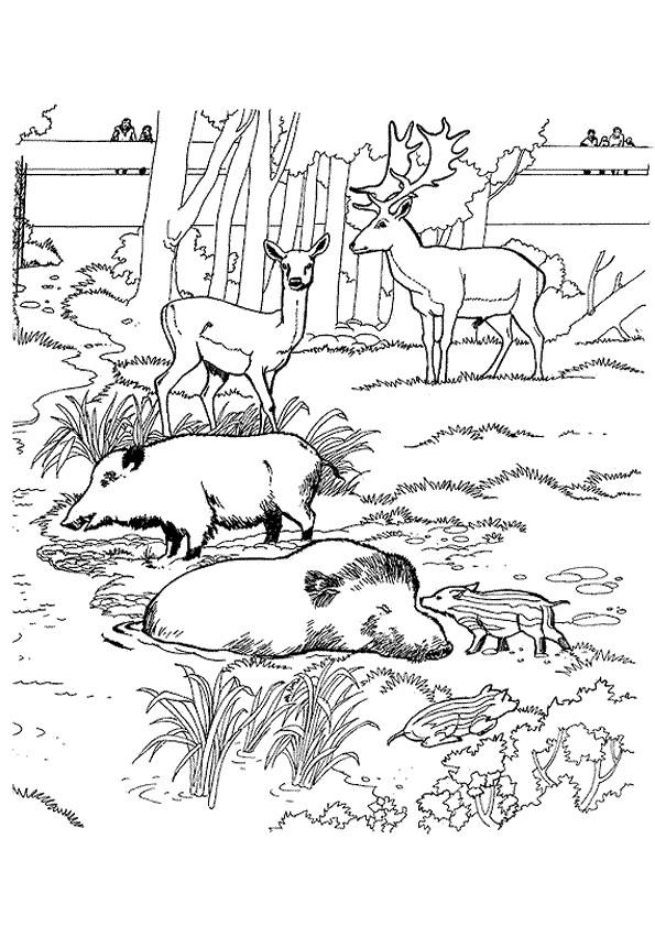 Coloriage et dessins gratuits Sanglier 8 à imprimer
