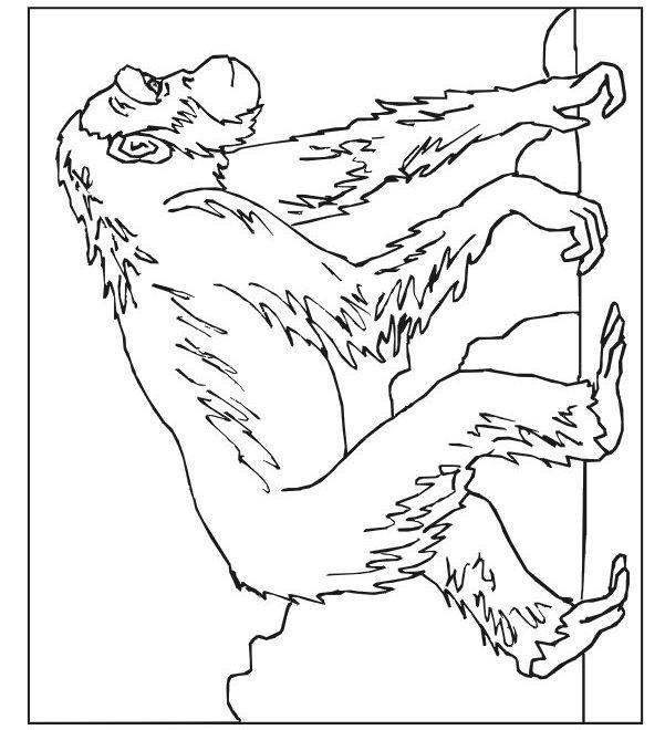 Coloriage et dessins gratuits Dessin de gorille à imprimer
