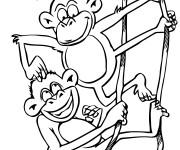Coloriage Deux singes jouent