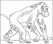 Coloriage Gorille se ballade