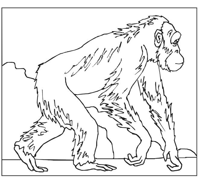 Coloriage et dessins gratuits Gorille se ballade à imprimer