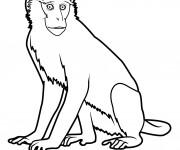 Coloriage et dessins gratuit Guenon à imprimer
