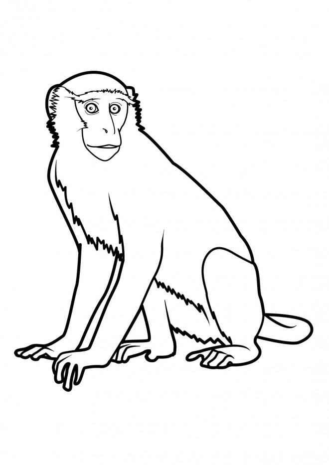Coloriage et dessins gratuits Guenon à imprimer
