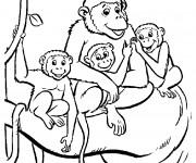 Coloriage La famille des Singes