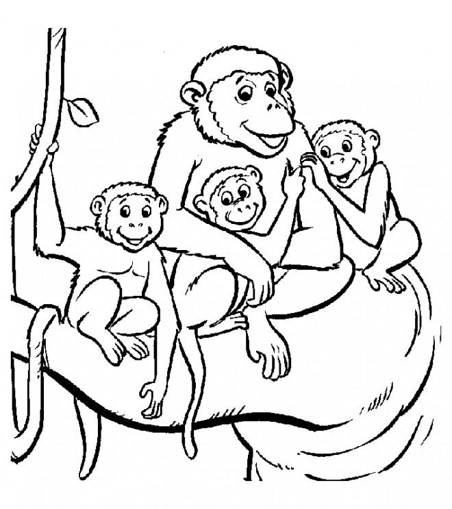 Coloriage La Famille Des Singes Dessin Gratuit à Imprimer