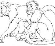 Coloriage Les singes