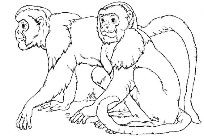 Coloriage et dessins gratuits Les singes à imprimer