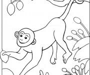 Coloriage Singe dans un arbre