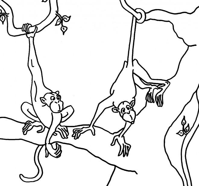Coloriage et dessins gratuits Singe dessin animal en ligne à imprimer