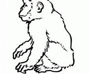Coloriage et dessins gratuit Singe dessin noir et blanc à imprimer