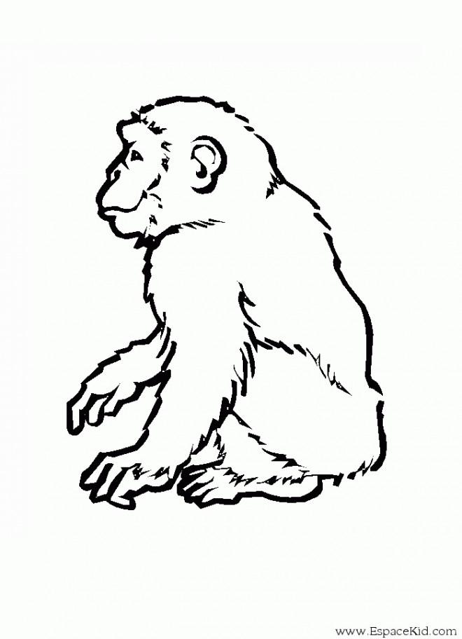 Coloriage singe dessin noir et blanc dessin gratuit imprimer - Dessin noir et blanc animaux ...