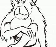 Coloriage et dessins gratuit Singe Ouistiti à imprimer