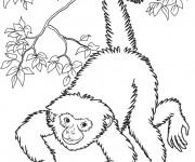 Coloriage et dessins gratuit Singe réaliste à imprimer