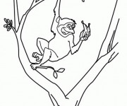 Coloriage Singe s'amusant sur l'arbre