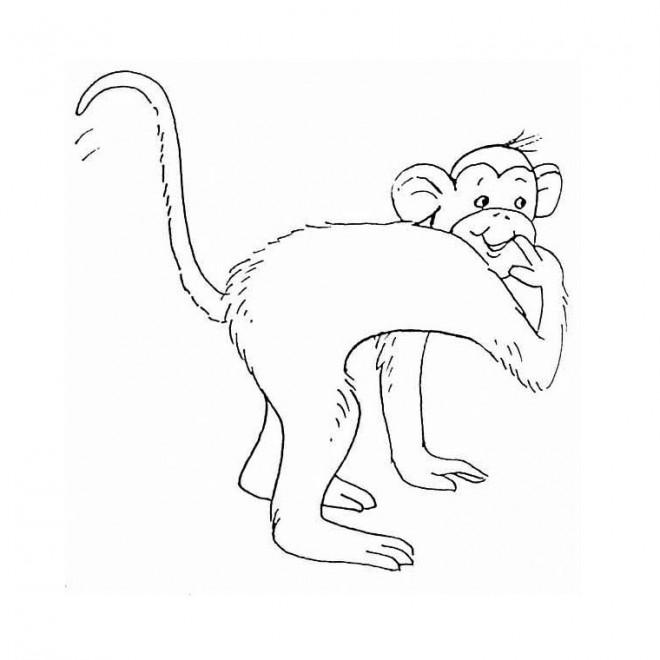 Coloriage et dessins gratuits Singe souriant à imprimer