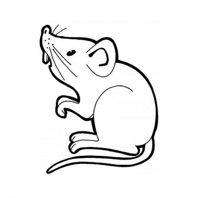 Coloriage souris vecteur dessin gratuit imprimer - Dessin sourie ...