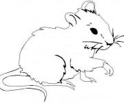 Coloriage et dessins gratuit Une souris à imprimer