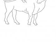 Coloriage Taureau à colorier