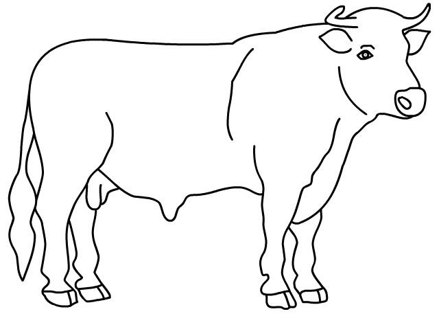 Coloriage taureau en couleur dessin gratuit imprimer - Dessin de toro ...