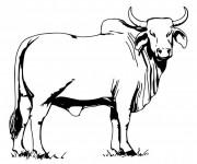 Coloriage Un taureau Camarguais en couleur